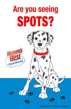 If you have spots on your carpets let the experts at Heaven's Best come in and take care of them. Give us a call today. You will be glad you did. Heaven's Best Carpet Cleaning, Milwaukee WI, 414-202-8515.