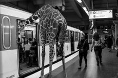 """ Animètro "" : the animals of the savannah in the Paris Metro ! French photographer Clarisse Rebotier"