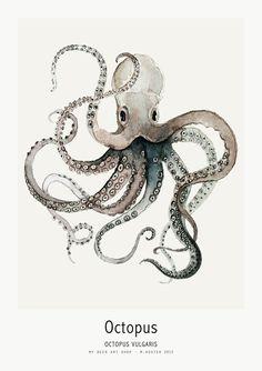 My Deer // Ocean Octopus