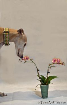 Smelling flowers :)