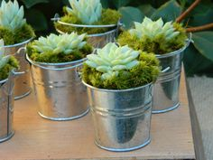 Succulent Wedding Favor, Succulent Bridal Shower Favor, Rustic Wedding Favor, Mini Succulent Plant Favors, Mini Silver Pails With Succulent.