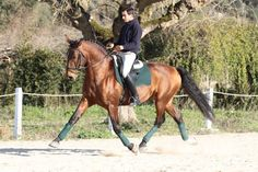 Alter Real stallion Coronel