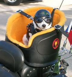 motorcycling: that's how you take your dog along...LOVE IT!! Look out Maggie...