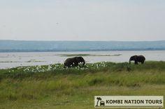 Elephants on Lake Albert. For more information on Uganda's National Parks and Reserves, please visit our website.