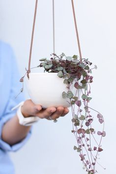 This white hanging planter is made in a minimalist style. The white ceramic planter lends visual interest in any space. This wall planter is the perfect size for a small plant or succulent. Succulent Hanging Planter, Succulent Terrarium, Hanging Planters, Wall Planters, Concrete Planters, Succulents Garden, Wrought Iron Wall Decor, Iron Decor, White Ceramic Planter