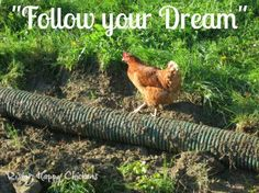 Chicken Quotes, Raising Chickens, Chickens Backyard, Be Yourself Quotes, Dreaming Of You, Funny Quotes, Hilarious, Humor, Facebook