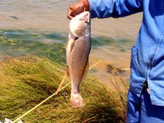 Fishing – Elf (Chad) Kabeljou (cob) or Steenbras during the summer months and Karp during the winter months when the Berg River's water is fresh Kinds Of Fruits, African Culture, Summer Months, Winter Months, Bird Watching, Farm Life, Fishing, March 2014, Activities