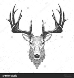 deer head on white, hand drawn vintage illustration