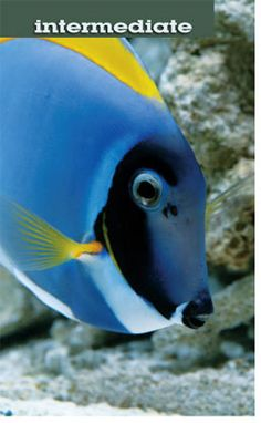 Aquarium Fish Health: Importance of Water Changes in Fresh and Saltwater Aquariums