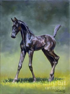 American Saddlebred Painting - Feisty Lady by Jeanne Newton Schoborg Horse Drawings, Animal Drawings, Horse Artwork, Horse Paintings, American Saddlebred, Baby Horses, Equine Art, Horse Pictures, Wildlife Art