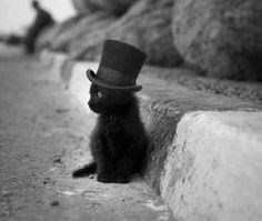 slash hat cat :)
