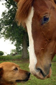 horse and dog!