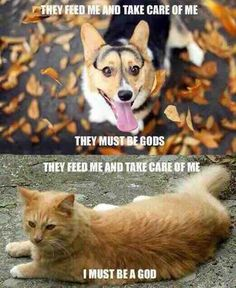The mindset of a dog vs a cat