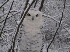Handmade/ Needle Felted Animals/Snowy Owl by ShellsMysticFelts, $350.00