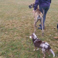 Fun day at Leamington Off-leash Dog Park - Leamington, ON - Angus Off-Leash #dogs #puppies #cutedogs #dogparks #leamington #ontario #angusoffleash