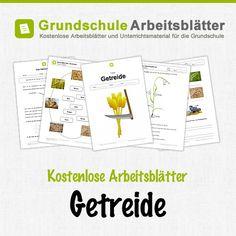 Kostenlose Arbeitsblätter und Unterrichtsmaterial für den Sachunterricht zum Thema Getreide in der Grundschule.
