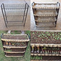 New #propagationstation 🍃🌱 From an old flimsy shoe rack to a 4 tier of more organized leaves. I had this idea for a long time and today finally made the time for it. Feeling accomplished today! 😅✅♻️ #succulentsunday #succulentsfromscratch #succulentpropagation #diy #upcycle #upcycled #repurpose #repurposed #crafty  #succulents #succulove #succulentcity #propagation #succulentgarden #jungalowstyle #crazyplantlady #garden #succulenthoarder