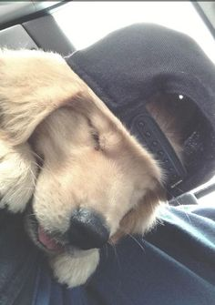 "puppies pull off the ""backwards hat look"" better than anyone else! <3"