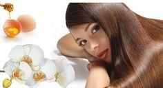 4.bp.blogspot.com -CanaqENzGiU VfNptGjk5MI AAAAAAAACKc Q42nSKk-Tyk s1600 Huevo-miel-y-aceite-de-oliva-para-hacer-crecer-el-cabello.jpg