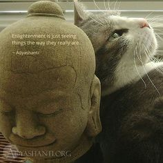 Enlightenment is just seeing things the way they really are. ~ Adyashanti