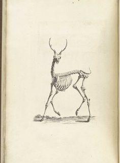 vintage anatomical drawing
