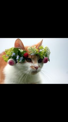 Kitty with a flower crown