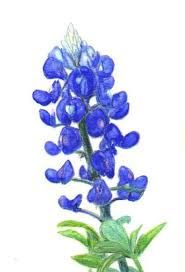 bluebonnet drawing - Google Search (For my tattoo)