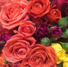 Choosing roses for a arrangement. Being surrounded by buckets and buckets of is certainly one of life's good things. Buckets, Roses, Flowers, Plants, Life, Pink, Bucket, Rose, Plant