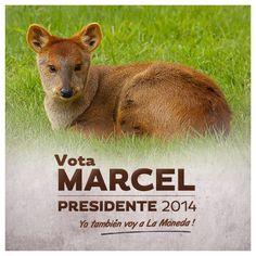 #marcelclaude #MarcelClaude #marcelclaude2014 #MarcelClaude2014 #MarcelClaudePresidente #marcelclaudepresidente #marcelclaudepresidente #todosalamoneda #TodosalaMoneda #marcelclaudeanimalista @derechosdelosanimales