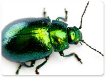 Beetles, beetles, beetles. Contact Aerex Pest Control. www.aerex.com