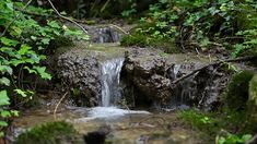 cinemagraph gif gif water nature cinemagraph perfect loop cinemagraphs forest trees stream flow living stills