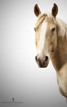 Horse Studio Photography | St. Augustine, Jacksonville, Tampa, Orlando, Palm Coast by Jennifer Fergus Creative, via Flickr