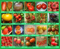 Bulkware 250 Samen gigantomo Tomate Gemüse