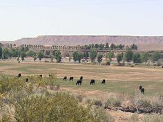 I-Team: Feds and Nevada rancher facing off over public lands - 8 News NOW