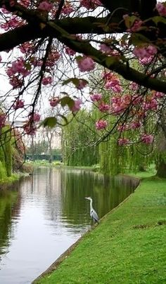 Wildlife in Regent's Park, London, England  - Book Local Traders --> https://SnipTask.com  #RePin by AT Social Media Marketing - Pinterest Marketing Specialists ATSocialMedia.co.uk