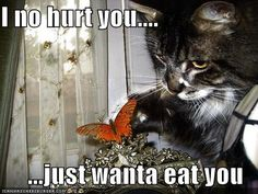 Cool Funny Animals With Captions images - http://www.pinterestspot.net/cool-funny-animals-with-captions-images/