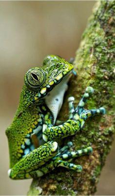 Bon Aucun coût Reptiles and amphibians Réflexions Reptiles Et Amphibiens, Cute Reptiles, Mammals, Nature Animals, Animals And Pets, Cute Animals, Funny Frogs, Cute Frogs, Beautiful Creatures