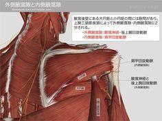 外側腋窩隙と内側腋窩隙
