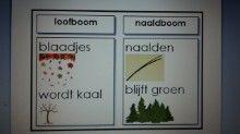 Woordposter woordkast boomsoorten