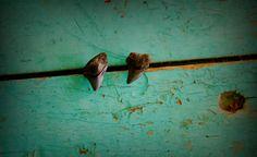 Small Shark Tooth Earrings ~ real Shark teeth ~ ocean fossil beach jewelry by… Boho Festival Fashion, Festival Style, Beach Jewelry, Boho Jewelry, Shell Earrings, Stud Earrings, Cool Sharks, Small Shark, Venice Florida