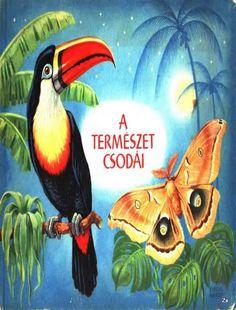 A természet csodái - Kiss Virág - Picasa Webalbumok Rooster, Illustration, Animals, Album, Facebook, School, Books, Picasa, Animales