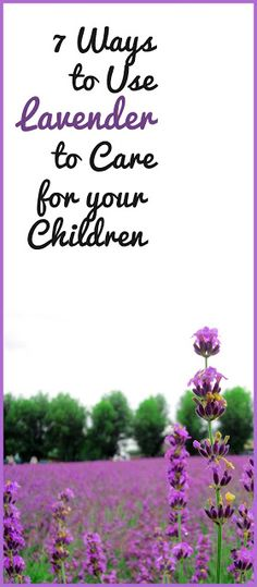Lavender can be used for helping babies sleep, healing boo-boos, natural insect repellent, and so much more.