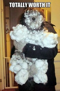 haha that dog sure had fun in the snow!
