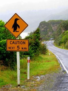 Keeping an eye out for the blue penguins on the way to Charleston (Punakaiki, New Zealand)