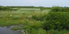 Znalezione obrazy dla zapytania meadows zdjecia