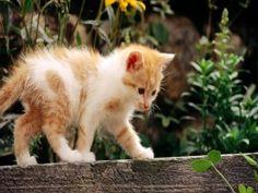 Gatito caminando sobre un listón de madera