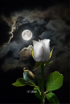 Good night my beautiful, hold on incredible comes to mind as well. Oh adorable blends well with fucking awesome and just perfection. Good my Star never a moment goes by. Good night my dearest and rarest beauty in he universe. Moon Pictures, Pretty Pictures, Beautiful Moon, Beautiful Roses, Shoot The Moon, Special Images, Moon Goddess, Moon Art, Stars And Moon