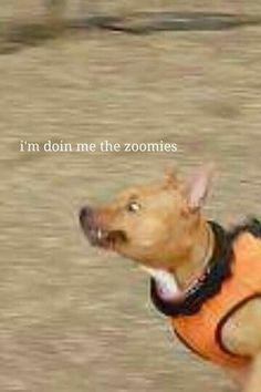 10 Best Doggo Memes Images In 2016 Dankest Memes Jokes Funny Memes