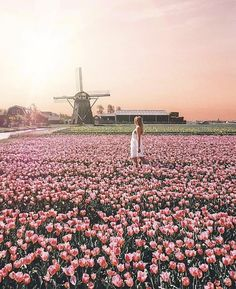 Travel Around The World, Around The Worlds, Paris Skyline, Amsterdam, Dolores Park, Road Trip, Wanderlust, In This Moment, Instagram