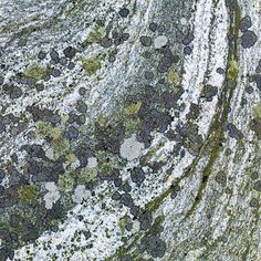 Lichen and moss on rock